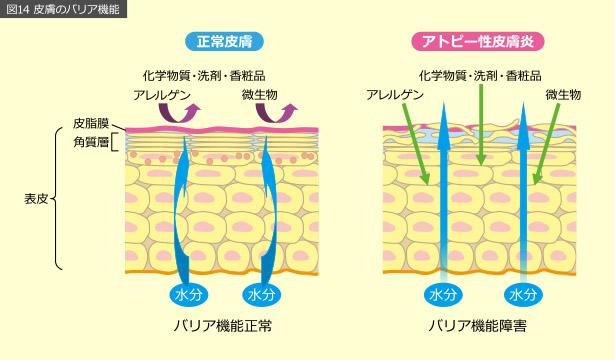 図14 皮膚のバリア機能